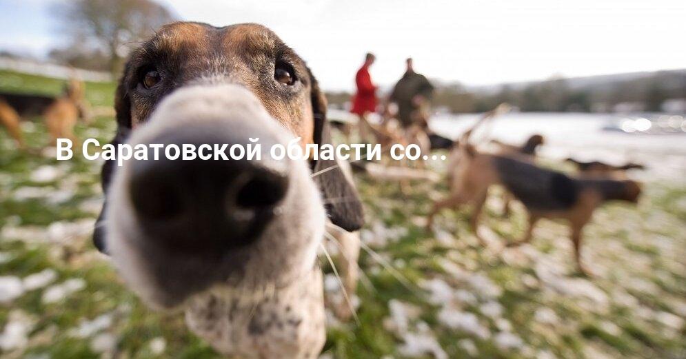 Под Саратовом собаки застрелили охотника